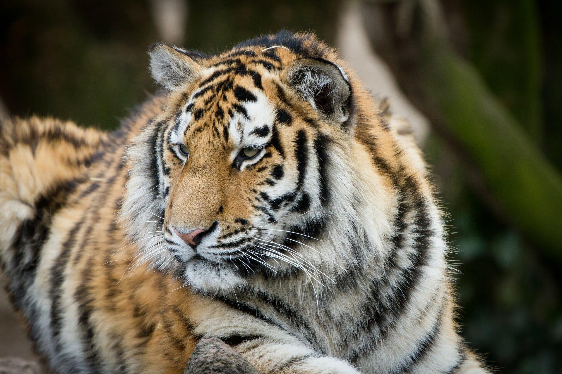 Klassenfahrt Köln Programm Zoo